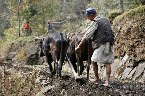 In de dag Nepal old man ploughing his field in nepal