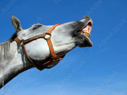 Canvastavla Neighing horse relating to the blue sky