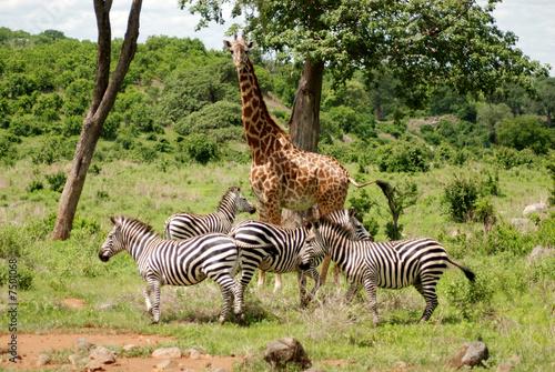 Tanzania Wild Landscape