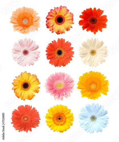 Fotografie, Obraz Colorful Gerbera