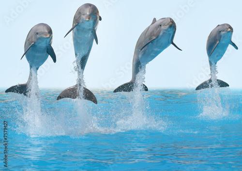 Staande foto Dolfijnen Delphine springen