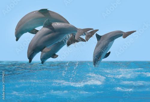 Poster Dolfijnen Delphine springen