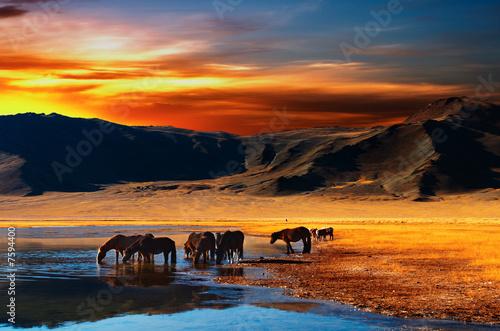 Foto-Flächenvorhang ohne Schienensystem - Drinking horses (von Dmitry Pichugin)