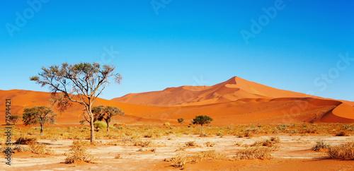 Poster de jardin Desert de sable Namib Desert