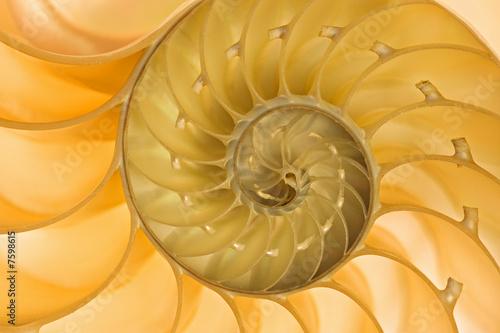Fotografie, Obraz  Nautilus Shell
