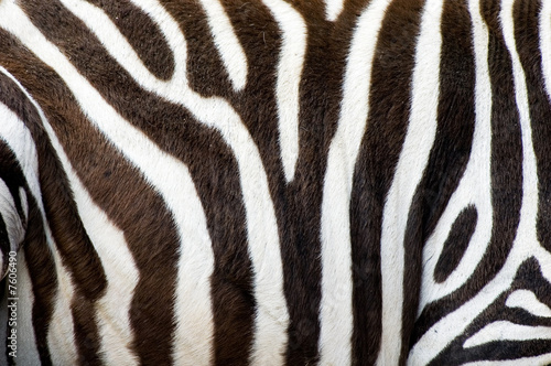 Photo Stands Zebra zebras skin