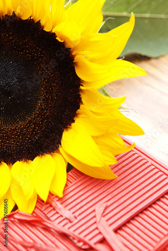 Fotografie, Obraz  Sunflower and a red box