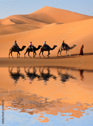 Camel Caravan in the Sahara Desert #7618230