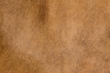 A Horse Fur Close Up