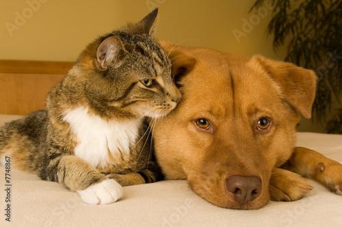 Cat and Dog © Michael Pettigrew