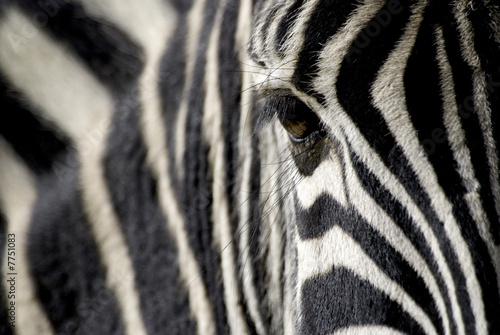 Foto op Canvas Zebra zebra eye