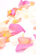 canvas print picture - rosenblaetter 5