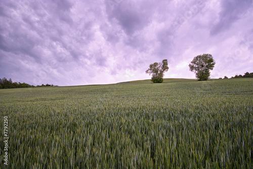 Papiers peints Lilas landscape blés