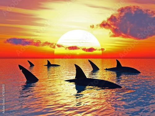 Fotografie, Obraz  žraloci
