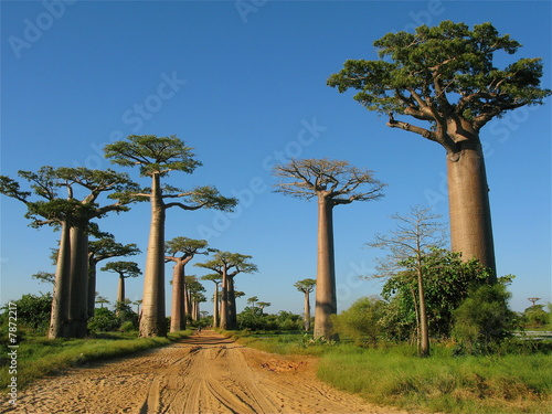 Photo Stands Baobab