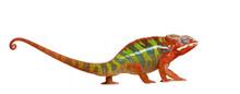 Chameleon Furcifer Pardalis - ...