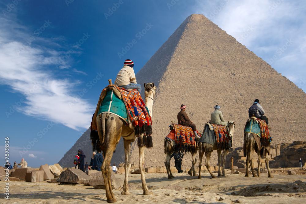 Fototapeta bedouin on camel near of egypt pyramid