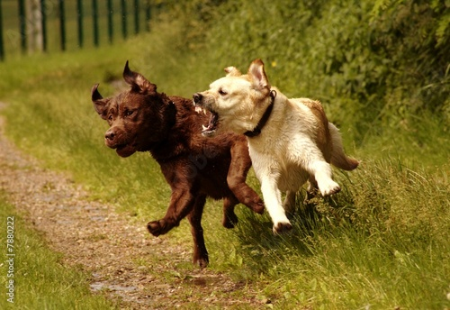 Photo Attaque de chien