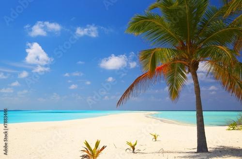 "Community Maske ""army blue"" - Tropical beach (von Malbert)"