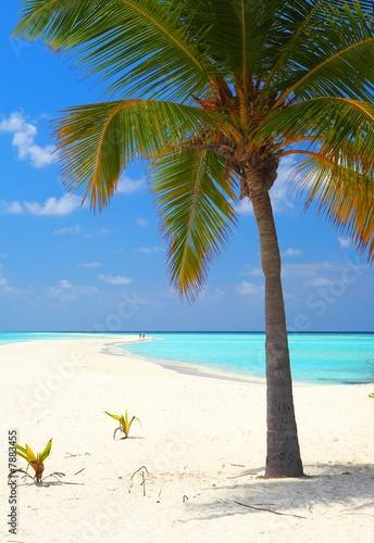 Foto-Leinwand - Infinity tropical beach (von Malbert)