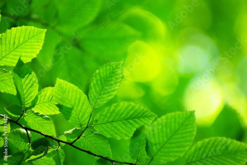 Foto-Kissen -  leaves background