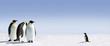 Leinwandbild Motiv Pinguin