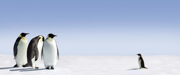 Fototapeta na wymiar Pinguin