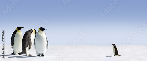 Foto op Plexiglas Pinguin Pinguin