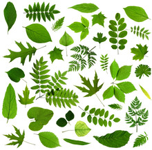 All Sorts Of Green Leaves