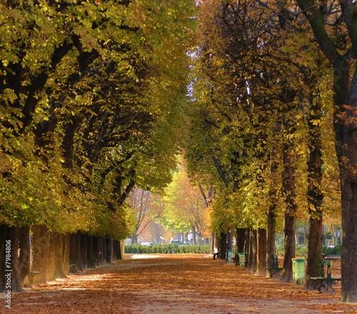 aleja-drzew-jesienia