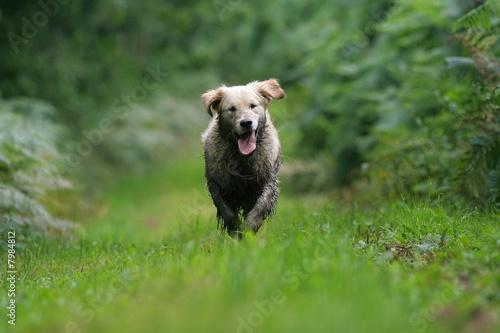Fotografía  chien sale a la campagne