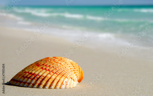 Foto-Rollo - Lone Seashell on Beach (von Cheryl Casey)