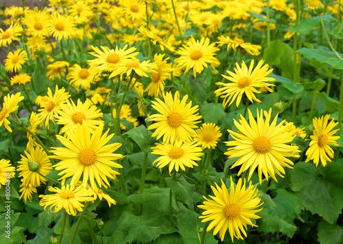 Gelbe Blumen @p(AS)ob