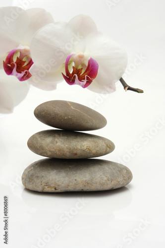 Doppelrollo mit Motiv - Steine Orchidee (von Reicher)