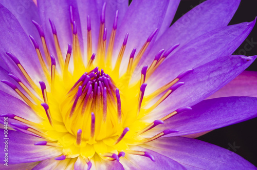 Photo Stands Water lilies water lily closeup