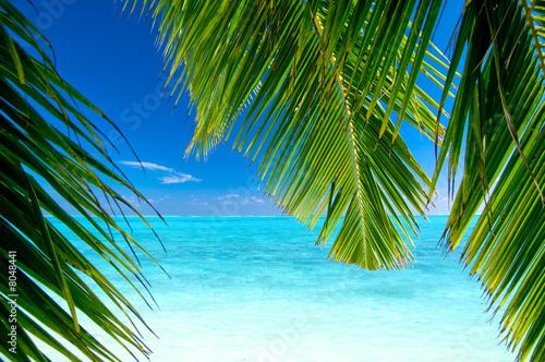 Foto-Leinwand - Strand mit Palmen (von Loocid GmbH)