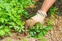 Weeding Garden