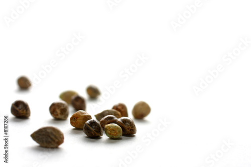 Fotografie, Obraz  Hemp Seeds