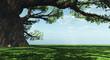 Leinwandbild Motiv Impressive baobab