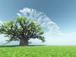canvas print picture Impressive baobab