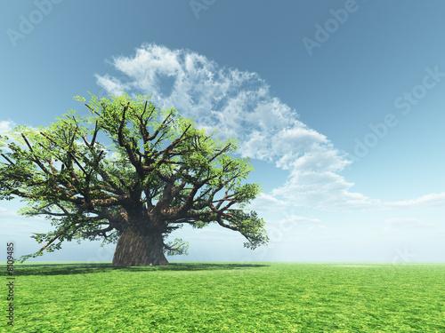 Valokuva  Impressive baobab