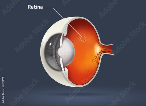 Fotografía Retina