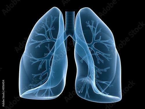 Canvas Print menschliche lunge mit bronchien