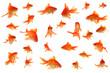 canvas print picture - Fantail goldfish collage
