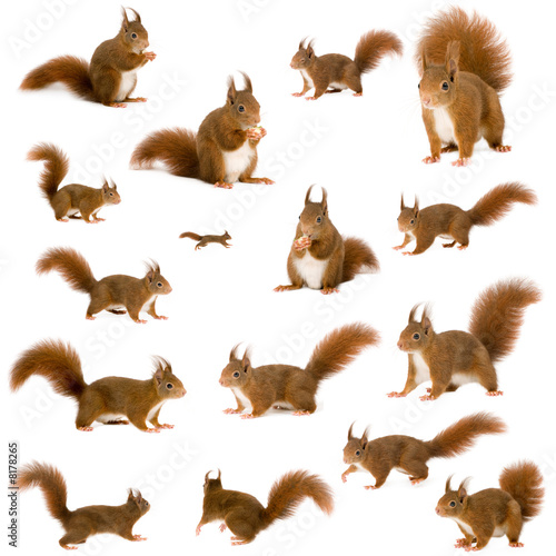 Spoed Foto op Canvas Eekhoorn arrangement of squirrels