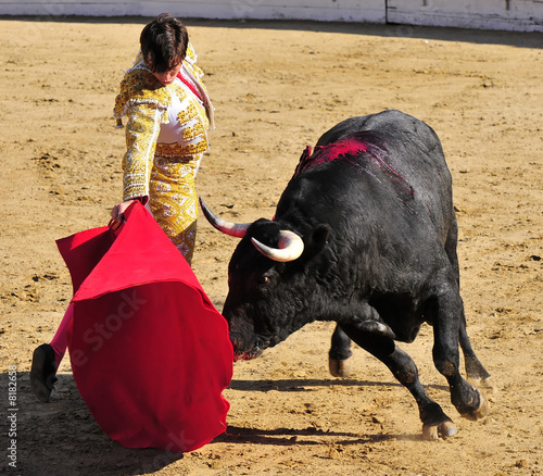 Photo Stands Bullfighting Matador & Bull