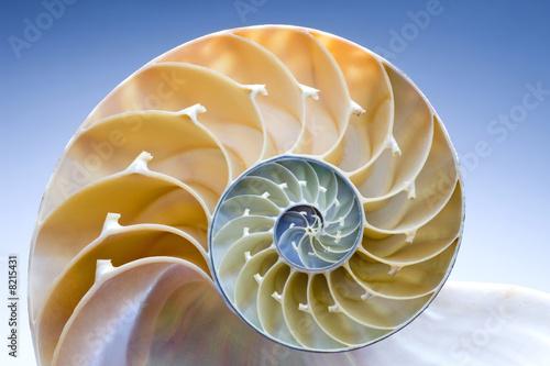 Fotobehang Spiraal Nautilus