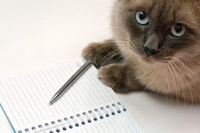 Cat, Pen And Blank Open Notepad