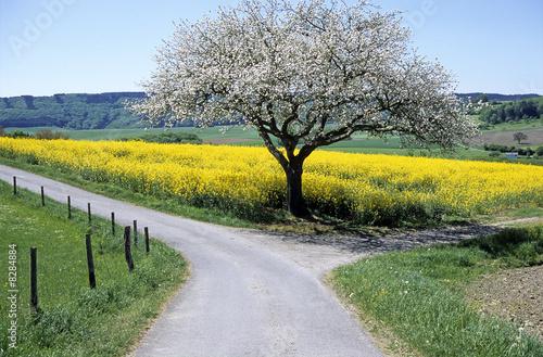 Obraz na plátně  Wegscheide 2