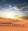 canvas print picture Caravan in desert